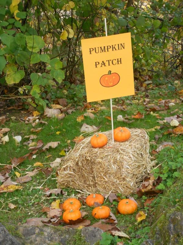 Halloween Carnival - Pumpkin Patch